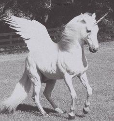 All Star Month: Unicorns