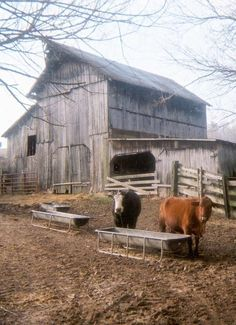 Olde Homestead Barn & Cows #coupon code nicesup123 gets 25% off at Provestra.com Skinception.com