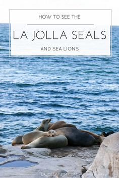 Everything you need to know about how to see the La Jolla seals and sea lions including a map, six popular viewpoints, parking, and other tips from a local. La Jolla California, California Camping, California Vacation, California Dreamin', California Quotes, California Burrito, California Mountains, California Closets, California Fashion