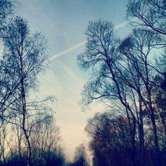 #forest #trees #november