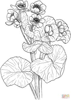 find this pin and more on coloring pages to print flowers by gogunia