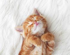 Kitten Cute Super Cute Kittens, Kittens Cutest Baby, Super Cute Puppies, Kittens Playing, Cats And Kittens, Camping With Cats, Sleepy Kitten, Kitten Photos, Kitty Images