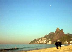 Howling to the moon: daylight delicious in Rio de Janeiro