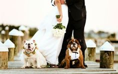 I love this wedding photo idea that includes their 2 bulldogs! {Wedding Photography} {Bride} {Groom} {Dogs} {English Bulldog}