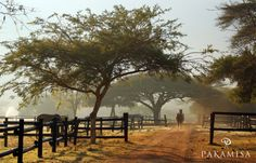 Pakamisa stables in Zululand, South Africa