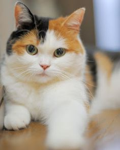 I Love Cats, Crazy Cats, Cute Cats, Kittens Cutest, Cats And Kittens, Ragdoll Kittens, Tabby Cats, Funny Kittens, Bengal Cats