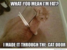 Poor cat lol