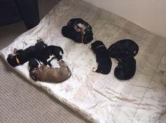 8 små babyer