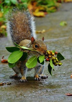 ♥ ...just today we got to watch the little squirrel that comes by our suburban backyard find the acorns I hid in the tree branches for him, and he went and buried it under one of our crepe myrtle trees...carefully patting the soil when he was done. Sweet thing to get to watch out our window today as fall comes in...