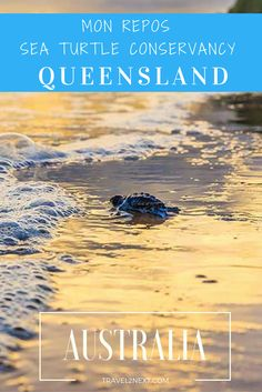 Mon Repos | Sea Turtle Conservancy. Mon Repos is famous for turtles and possibly one of the best places in Queensland to see turtles.