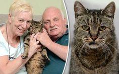 Αυτός είναι ο γηραιότερος γάτος στον κόσμο