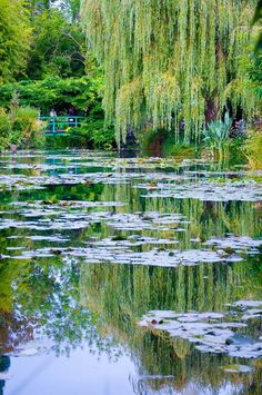 "Giverny - Monet Garden in France  --  It is a lovely place to visit.  The April we were there it rained, then stopped ""just for us"" to see the gardens! <3"