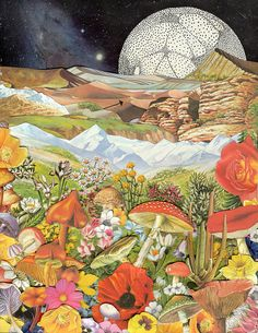 Shrooms - collage by ben giles, via Flickr