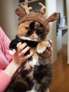 A Calico Reindeer | most cats don't like dress up, I've never tried , never would, but that face!Fluffy belly