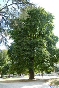 Old Trees, Lonely, Drawing, Deco, Nature, Palmas, Naturaleza, Shrub, Adorable Animals