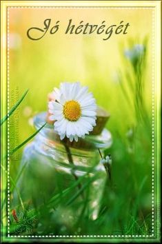 daisy in a bottle in green grass Happy Flowers, Beautiful Flowers, Beautiful Pictures, Beautiful Beautiful, Bouquet Champetre, Sunflowers And Daisies, Daisy Love, Daisy Daisy, Daisy Hill