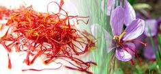 """Zafferano di Sardegna DOP is a spice derived from the stigma of the Crocus Sativus flower, a nice violet flower cultivated in gthe provinde of Medio Campidano.   The word zafferano (saffron) derives from the Latin safranum, which comes from the Arab word meaning """"yellow"""": in fact, the main characteristic of this spice is the intense yellow hue. This is why  in ancient times it was used to dye the most precious fabrics."""
