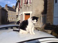de kat heeft in de tuin vrij parkeren