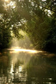 Sundarbans - Wikipedia, the free encyclopedia. Located near the delta of the Ganges River in India-Bangladesh. At 3,861 square miles, it is the largest swamp in the world.