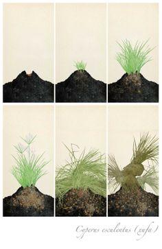 Xufa / Chufa, Fases Screen Printing, Valencia, Garden, Nature, Madrid, Plants, Museum, Vegetable Garden, Dibujo