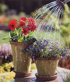 Container gardening Outdoor Planters, Garden Planters, Pot Plants, Backyard Paradise, My Secret Garden, Window Boxes, Edible Garden, Plant Care, Daisies