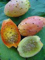 Higo chumbo, Higos chumbos, Tunos, Chumbera, Nopal, Tuna, Tunera.Fruit growing in Spain.