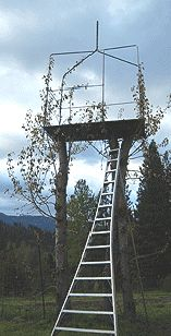 Cut three trees the same height, put plywood on top, add ladder. Treehouse!