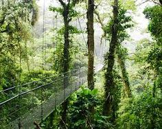 COSTA RICA. . . Rainforest 2013
