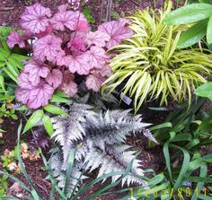 Heuchera_Hakonechloa1.jpg Photo:  This Photo was uploaded by alina_1. Find other Heuchera_Hakonechloa1.jpg pictures and photos or upload your own with Ph...
