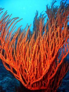 Plongée dans les fonds sous-marins de Mayotte - Images photos plongee
