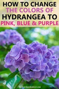 Hydrangea Colors, Hydrangea Care, Hydrangea Flower, Purple Hydrangeas, Garden Sink, Garden Plants, Growing Flowers, Planting Flowers, Flower Gardening
