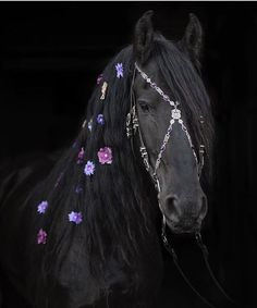A glorious mane on this black Friesian horse dotted with colourful flowers and wearing an fine and elaborate bridle Most Beautiful Horses, Animals Beautiful, Cute Animals, Horse Mane, Friesian Horse, Andalusian Horse, Arabian Horses, Cute Horses, Pretty Horses