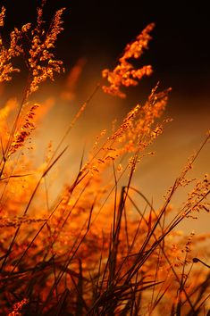 Topaz is the birthstone for November and when I started doing a little digging I found out that more specifically it's Orange Topaz. Orange Aesthetic, Belle Photo, Orange Color, Orange Twist, Orange Sky, Burnt Orange, Fields, Nature Photography, Memories Photography