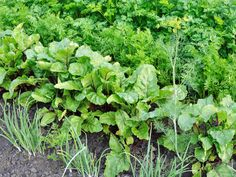 Scientists have found out that plants can hear Summer House Garden, Home And Garden, Small Farm, Farm Gardens, Vegan Life, Agriculture, Vegetable Garden, Gardening Tips, Canning