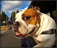 Printing Metal Nervous System Used Car Salesman Humor Haha Key: 8743033132 Kentucky, Beach Haven, New Smyrna Beach, Dog Car, Car Posters, Doge, Fast Cars, Used Cars, Dog Love
