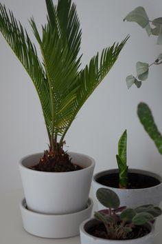 HUONEKASVIT Scandinavian Style Plants Interior