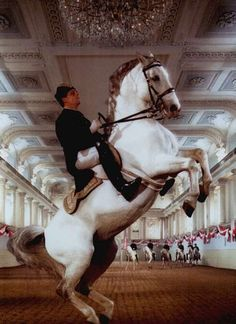 """""""Spanische Hofreitschule"""" (""""Spanish Riding School""""), a traditional riding school for Lipizzan horses"""