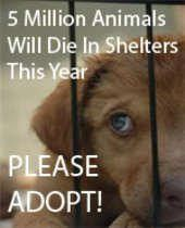 NEVER buy a pet  ADOPT and save a life!-PLEASE RE-PIN THIS!!!!!! Put the puppy-mills out of business, and save an animal's life. In return, you will get the kind of LOVE and RESPECT that most people only read about!