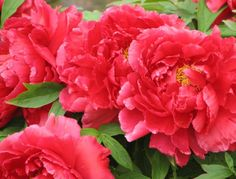 Peonies. Not inexpensive at all, but the scent is totally heavenly. At least worth considering for your bouquet.