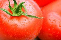 Крупные помидоры может вырастить каждый. Фото: norfolkbotanicalgarden.org