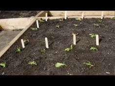 ▶ 3 Common Garden Planning Mistakes (and how to avoid them) - YouTube