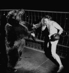 En 1949, un match de boxe entre un ours et un homme fut organisé. L'ours a gagné.  #histoire