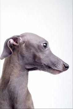 王侯貴族が愛した犬|「Dog Safety 倶楽部 」のファンがつくるサイト