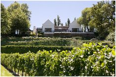 Fresh Wedding Ideas – Molenvliet Wedding Coordinator, Our Wedding, Wedding Ideas, Vineyard, Fresh, How To Plan, Mansions, House Styles, Outdoor