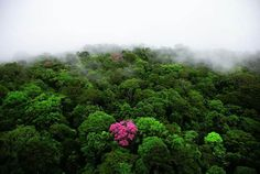Yann Arthus-Bertrand is a French photographer who specializes in aerial photography. Pink Trumpet Tree on Kaw mountain, French Guiana Aerial Photography, Nature Photography, Places Around The World, Around The Worlds, Arthus Bertrand, Forest And Wildlife, Image Nature, Nature Photos, Nature Sauvage