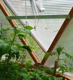 Geodesic greenhouse dome, used in Colorado, actually. It looks AWESOME. can use 10 months out of the year here (or probably in MI too)