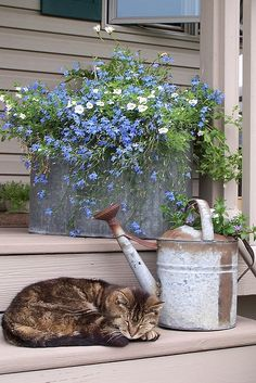 blue and white lobelia in old tin container, an old watering can and . I also need a kitty. galvanized tubs might be a good look as well as crates Country Life, Country Living, Country Charm, French Country, Pot Jardin, Down On The Farm, Garden Cottage, Cottage Porch, Cozy Cottage