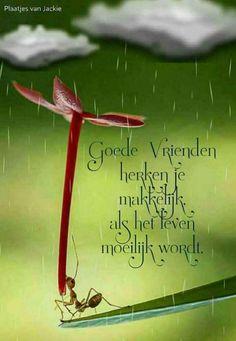 Voor mijn goede vrienden Friends Forever, Best Friends, Words For Girlfriend, Words Of Courage, Special Needs Quotes, Dutch Quotes, Verse, Haruki Murakami, Friendship Quotes