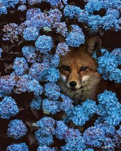 Is this for real!? My favorite animal hiding in my favorite flowers!!!