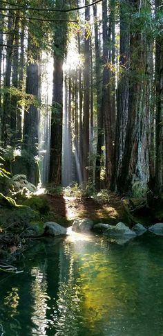 - Nature - Informations About Redwood Forest, Kalifornien. - Nature - Pin You can easily use my Forest Landscape, Abstract Landscape, Landscape Paintings, Acrylic Paintings, Landscape Design, Forest Scenery, Tree Forest, Magical Forest, Magical Gardens